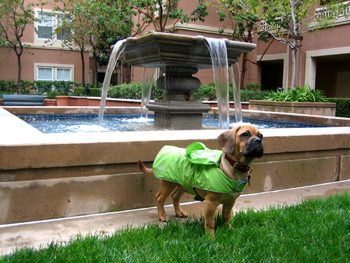 20061114-rain-coat.jpg