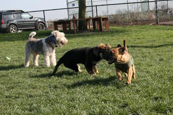 20061203-dog-park1.jpg