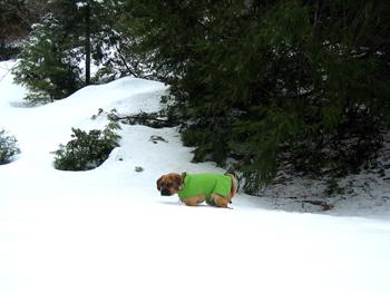 070128-snow-poo-poo.jpg