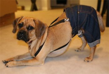 Puggle in Jeans