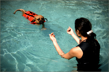 Swimming Puggle