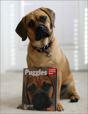 11 Responses to Puggle Book