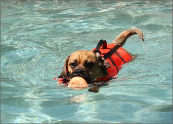Swimming Preston