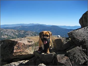 Puggle_Preston_Tahoe5