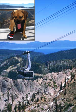 puggle_preston_tahoe2